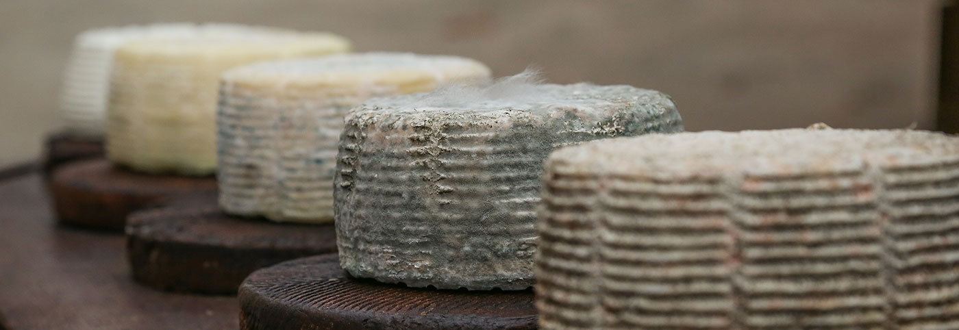 Traditionally made cheese